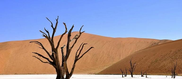 Toutes les bonnes raisons de passer un séjour en Namibie